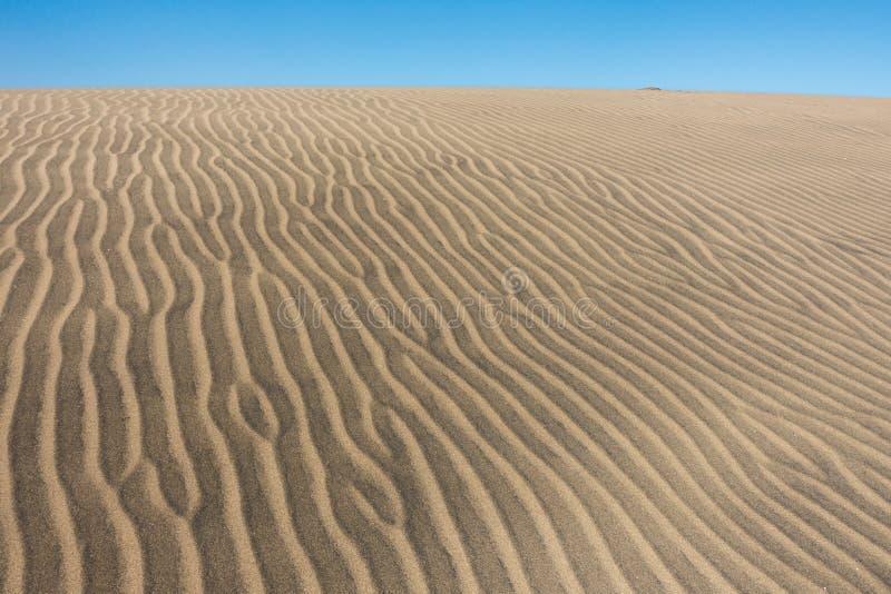 Duna di sabbia in gran canaria fotografie stock