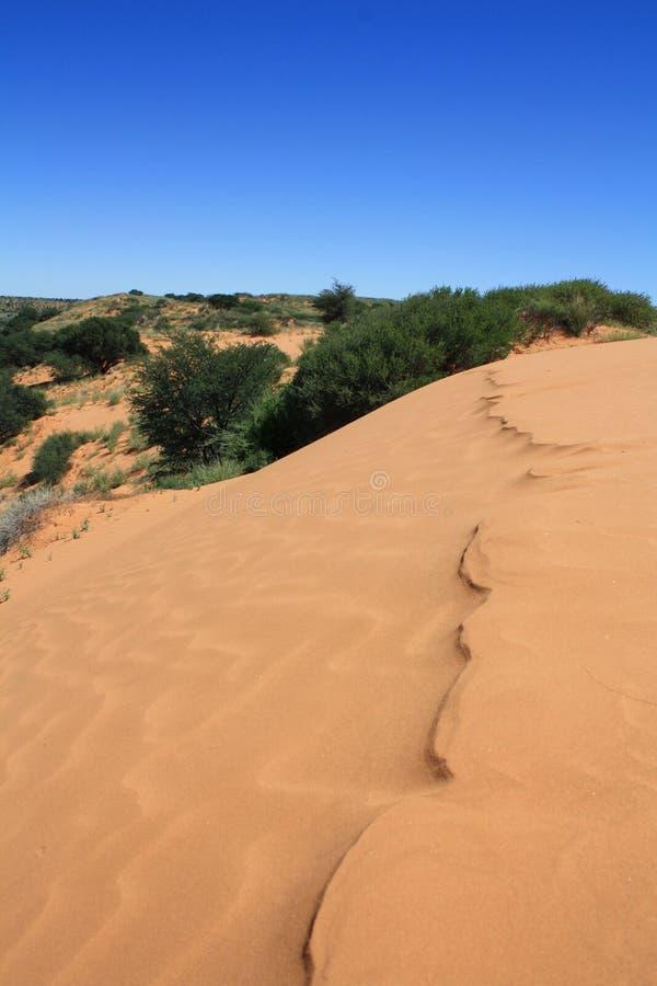 Duna di sabbia nel Botswana del sud fotografie stock