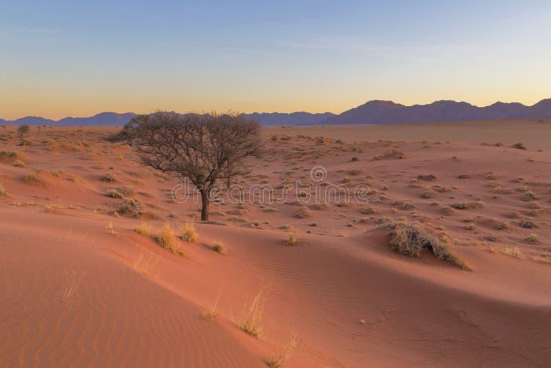 Duna di sabbia rossa nel deserto immagine stock