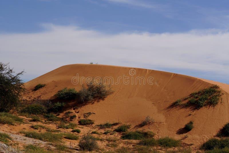 Duna do vermelho do deserto de Kalahari foto de stock