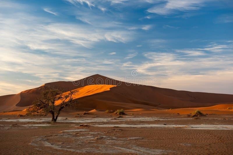 Duna e árvore seca em Sossusvlei fotos de stock