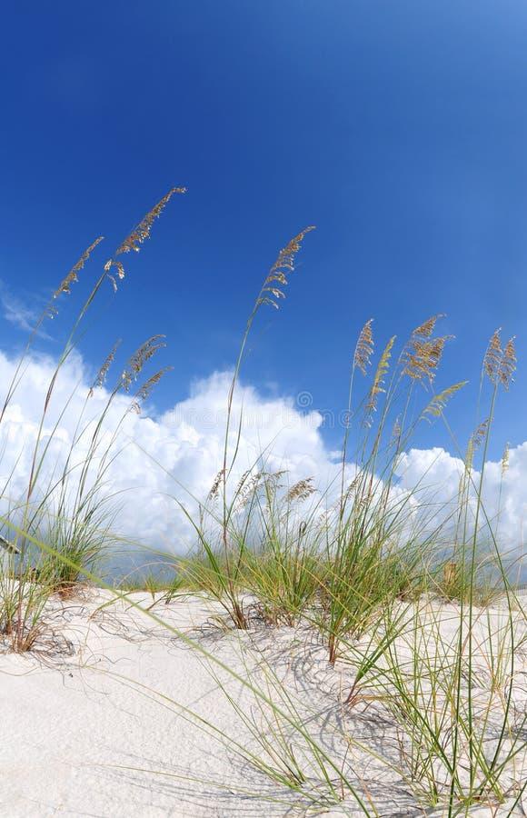 Duna e hierbas hermosas de arena fotografía de archivo