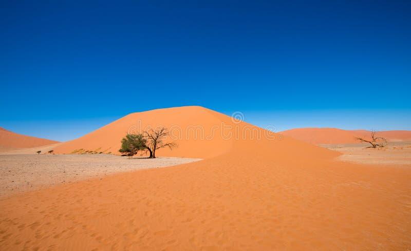 Duna 45, Sossusvlei, parque nacional de Namib-Naukluft, Namibia imagen de archivo libre de regalías