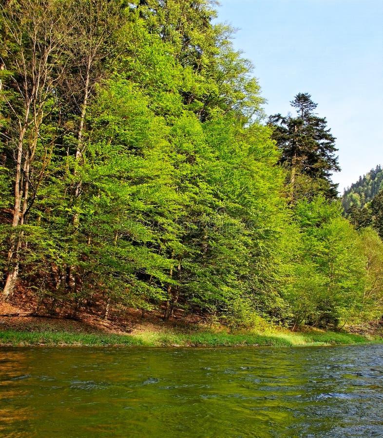 River Dunajec. Dunajec river between Slovakia and Poland royalty free stock photography