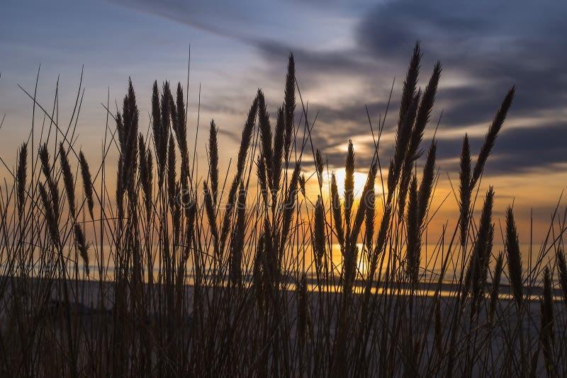 Dunas altas con la hierba de la duna y una playa ancha abajo foto de archivo libre de regalías