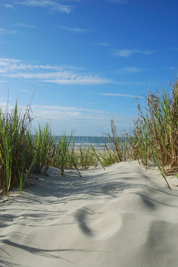 Dunas cénicos verticais da praia fotografia de stock royalty free