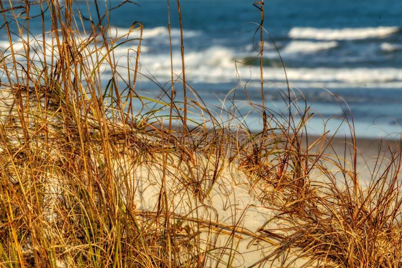 Dunas cerca de la costa fotografía de archivo