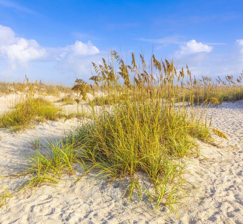 Dunas con la hierba de la playa fotografía de archivo libre de regalías