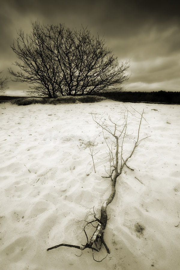 Dunas de areia com árvore foto de stock royalty free