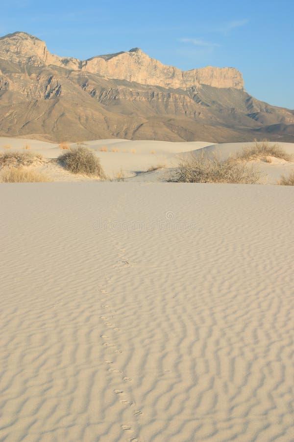 Dunas de areia da gipsita fotos de stock