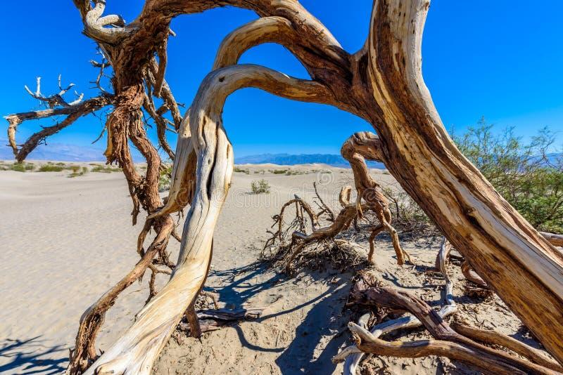 Dunas de areia do Mesquite no deserto do Vale da Morte, Calif?rnia, EUA foto de stock