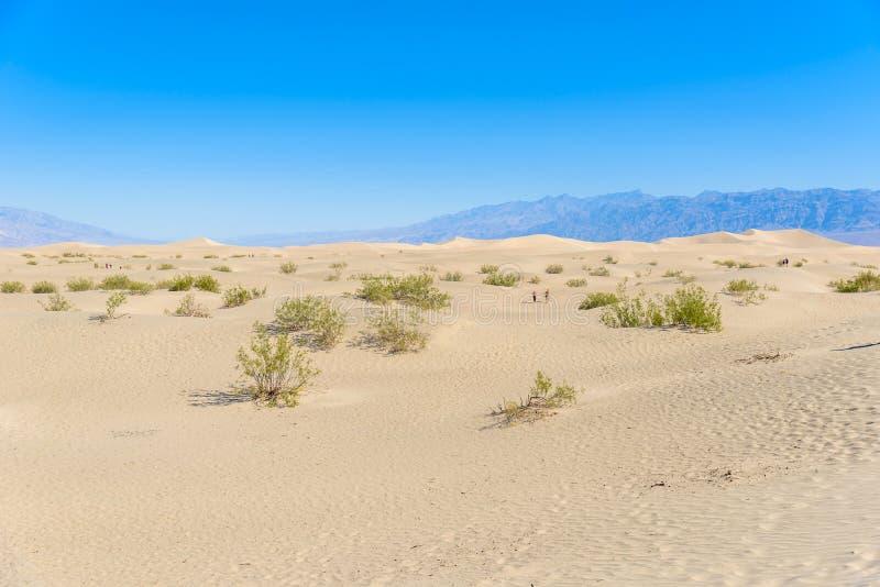 Dunas de areia do Mesquite no deserto do Vale da Morte, Calif?rnia, EUA fotos de stock royalty free