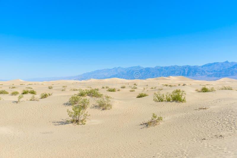 Dunas de areia do Mesquite no deserto do Vale da Morte, Calif?rnia, EUA fotografia de stock royalty free