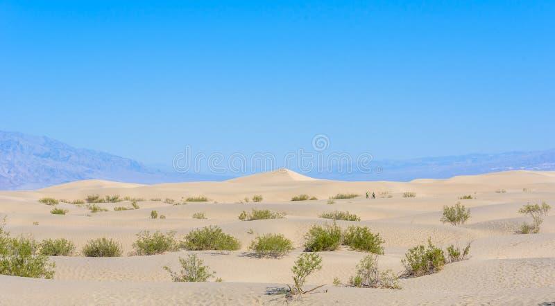 Dunas de areia do Mesquite no deserto do Vale da Morte, Calif?rnia, EUA imagem de stock royalty free