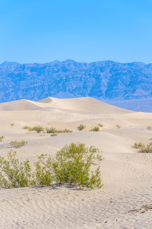 Dunas de areia do Mesquite no deserto do Vale da Morte, Calif?rnia, EUA fotografia de stock