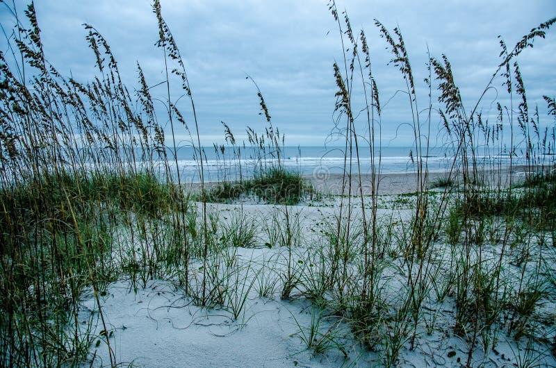 Dunas de areia e aveia do mar em Amelia Island fotos de stock