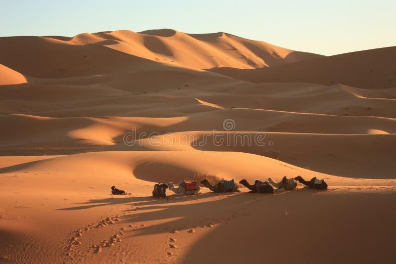 Dunas de areia em Sahara Desert em Merzouga Marrocos imagens de stock royalty free