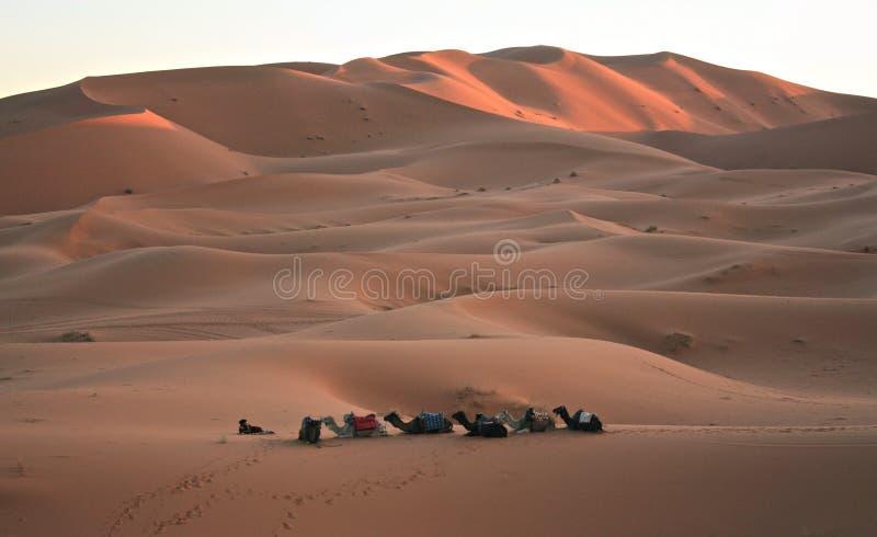Dunas de areia em Sahara Desert em Merzouga Marrocos fotografia de stock