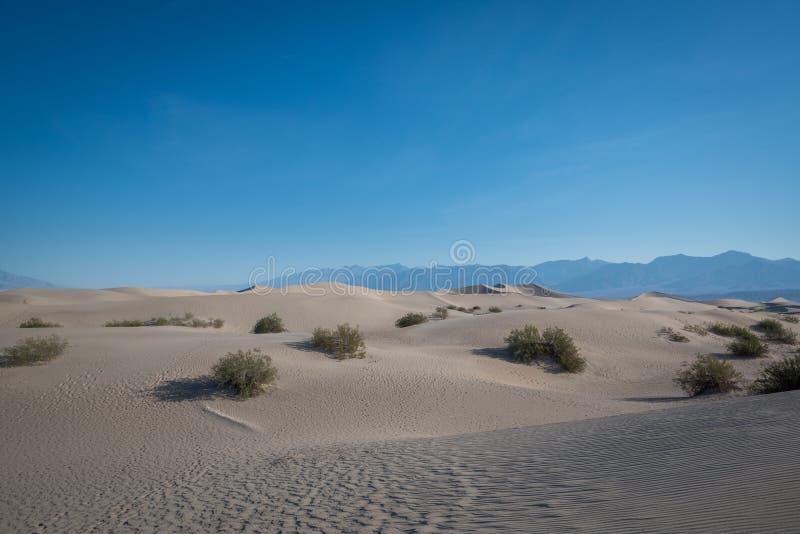 Dunas de areia lisas do Mesquite imagem de stock