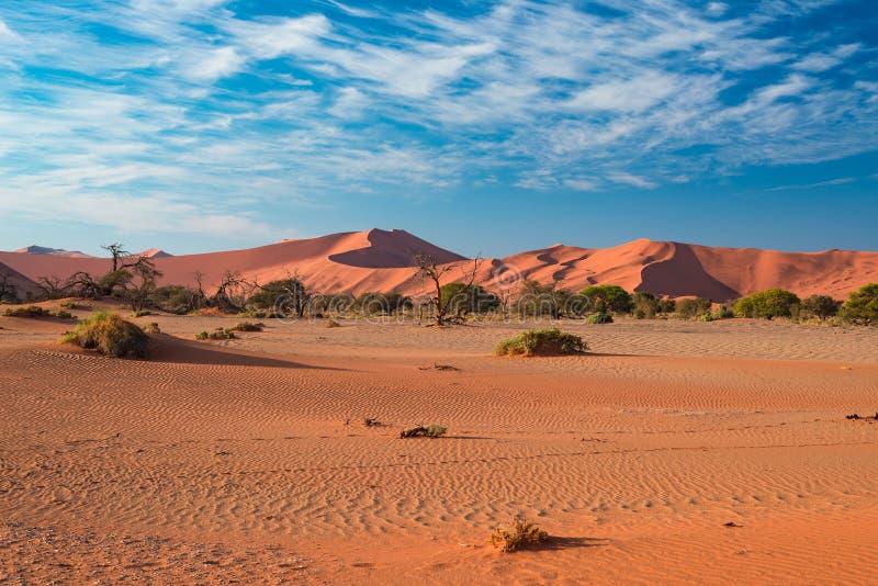 Dunas de areia no deserto de Namib no alvorecer, roadtrip no parque nacional maravilhoso de Namib Naukluft, destino do curso em N imagem de stock