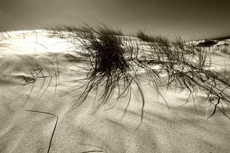 Dunas de arena 3 fotografía de archivo libre de regalías