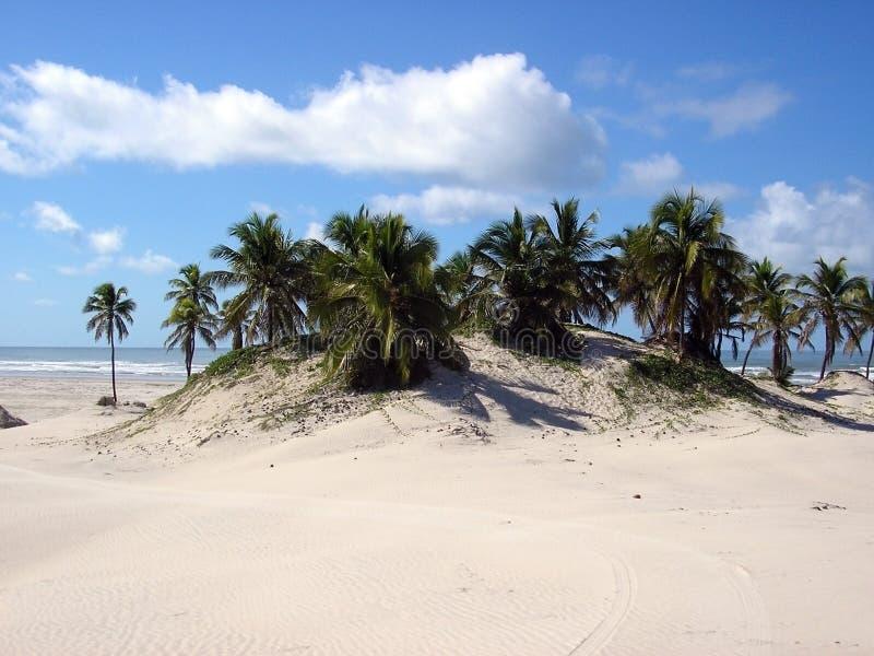 Dunas de arena alrededor de árboles fotos de archivo libres de regalías