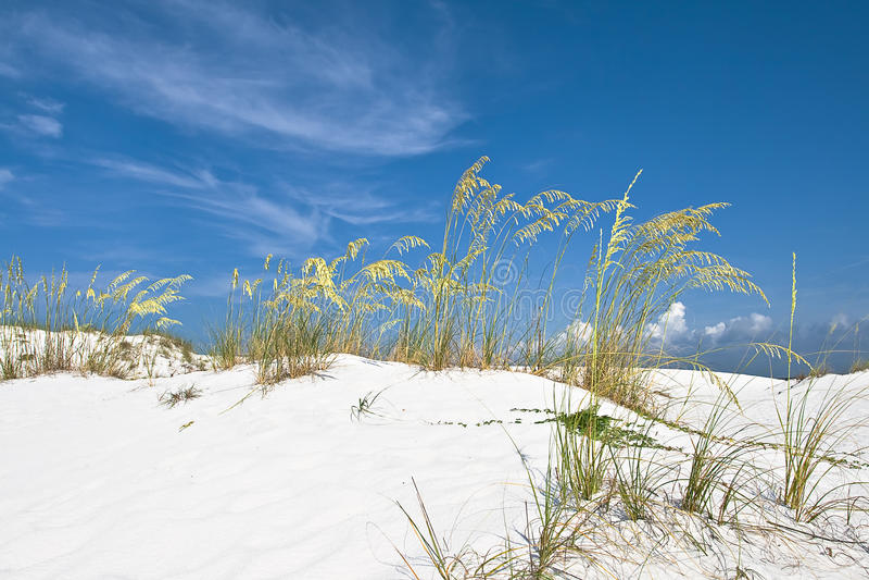 Dunas de arena blancas fotos de archivo libres de regalías