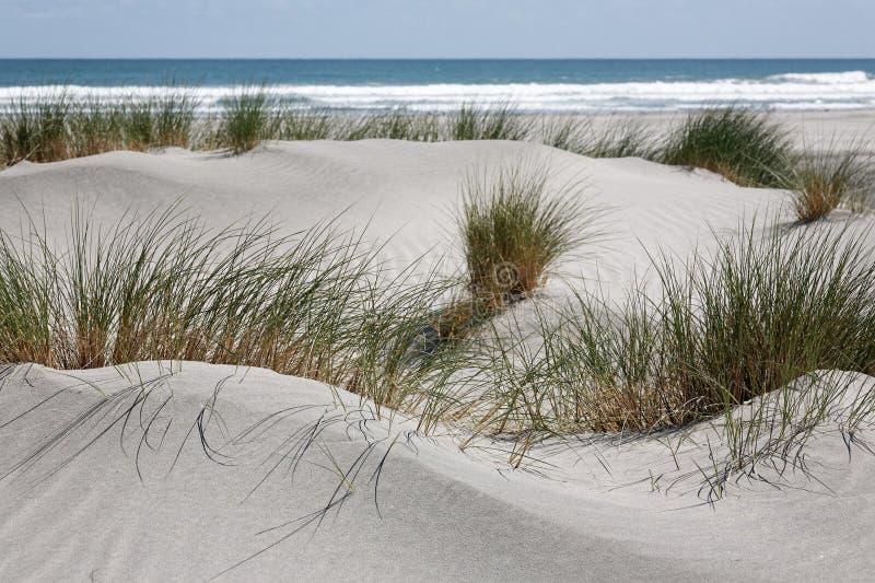 Dunas de arena e hierba blancas de la playa, costa oeste, Nueva Zelanda foto de archivo