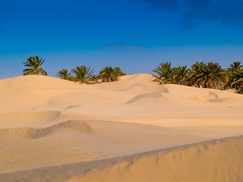 Dunas de arena en el desierto del Sáhara cerca de Douz Túnez África foto de archivo