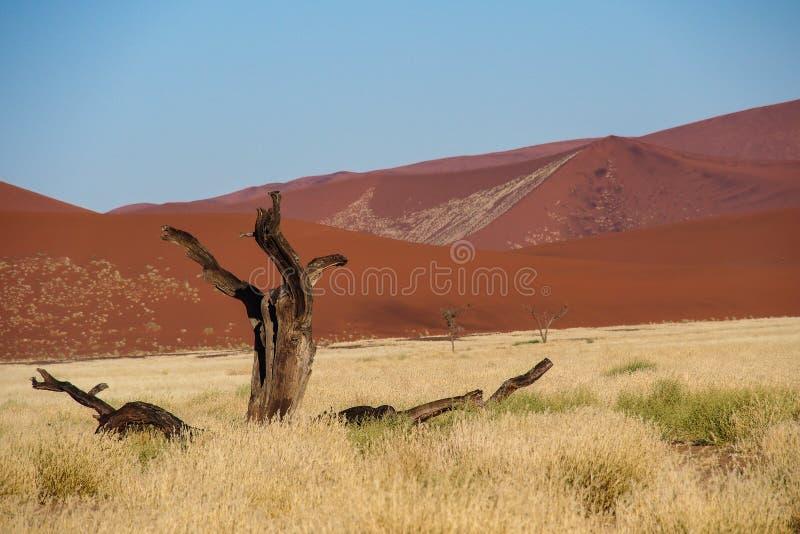 Dunas de arena en la cacerola de Sossusvlei en Namibia ?frica fotografía de archivo libre de regalías