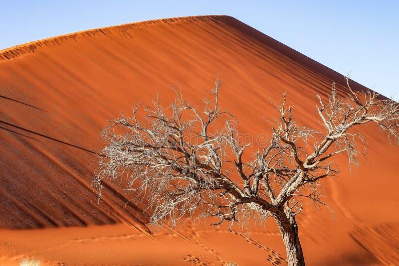 Dunas de arena en la cacerola de Sossusvlei en Namibia ?frica imagen de archivo libre de regalías
