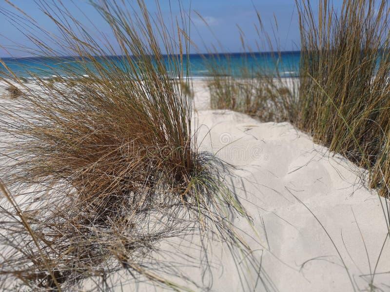 Dunas de arena en la playa de Cerdeña Oporto Pino imagenes de archivo