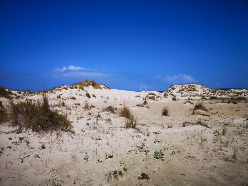 Dunas de arena en la playa de Cerdeña Oporto Pino fotografía de archivo libre de regalías