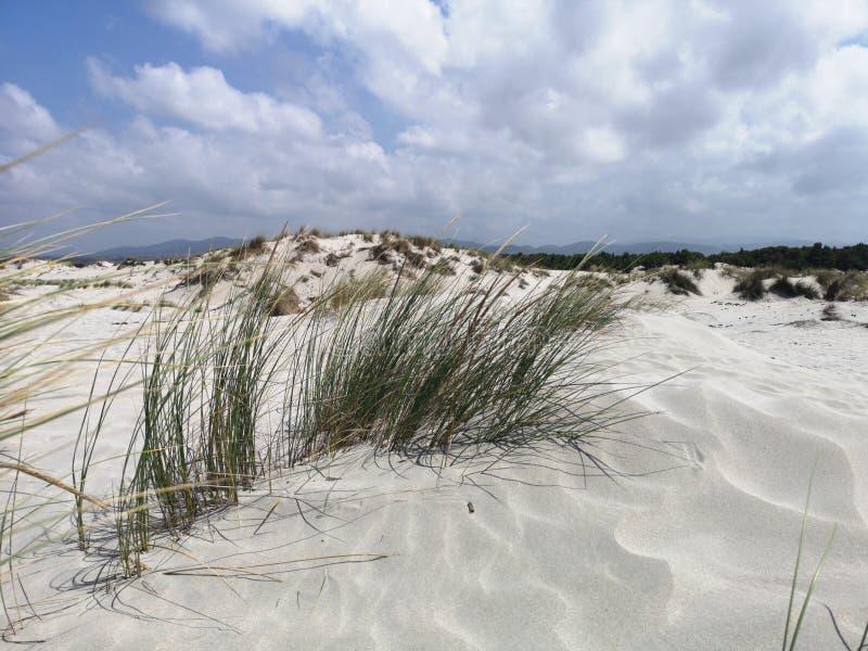 Dunas de arena en la playa de Cerdeña Oporto Pino fotografía de archivo