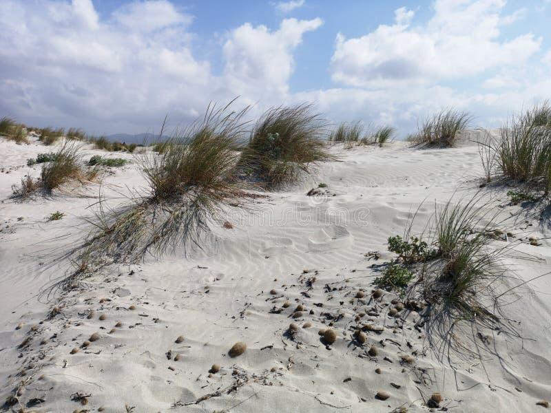 Dunas de arena en la playa de Cerdeña Oporto Pino imagen de archivo