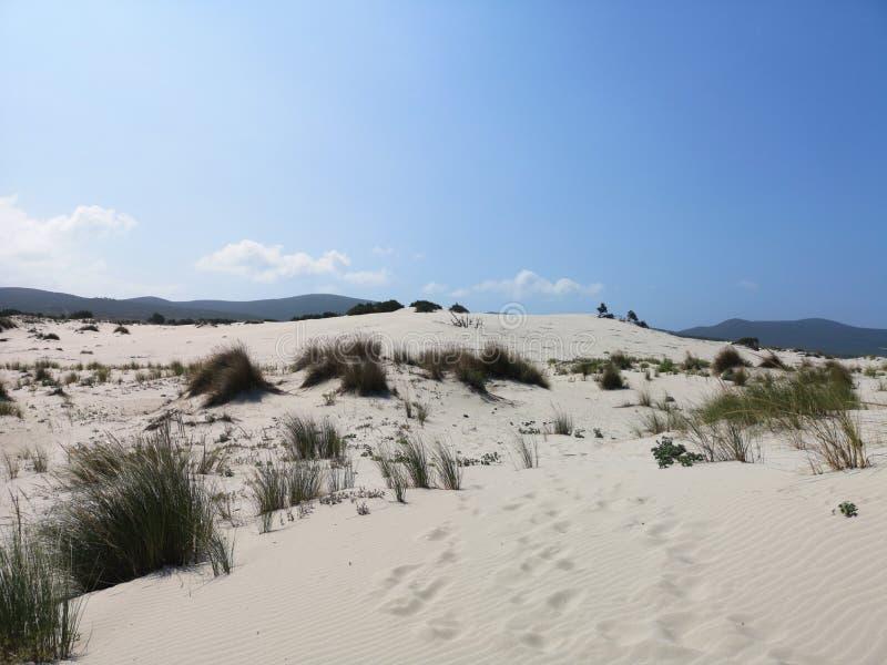 Dunas de arena en la playa de Cerdeña Oporto Pino fotos de archivo