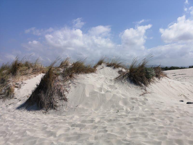 Dunas de arena en la playa de Cerdeña Oporto Pino imágenes de archivo libres de regalías