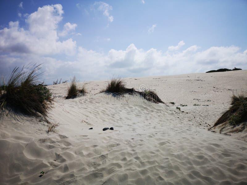 Dunas de arena en la playa de Cerdeña Oporto Pino imagen de archivo libre de regalías