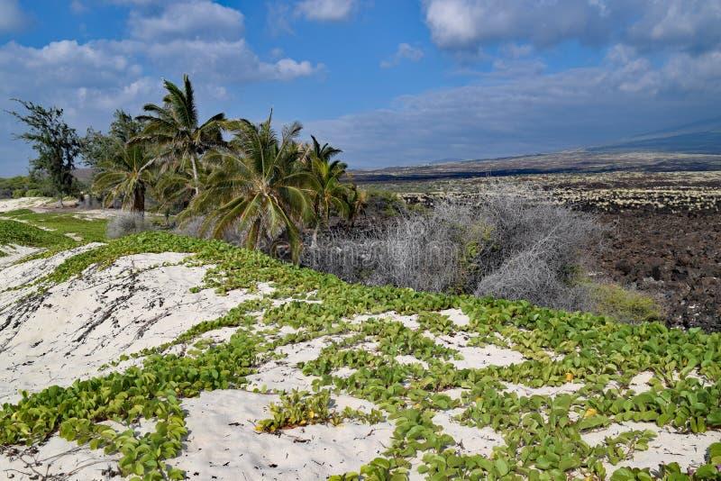 Dunas de arena en la playa de Makalawena, Hawaii fotos de archivo