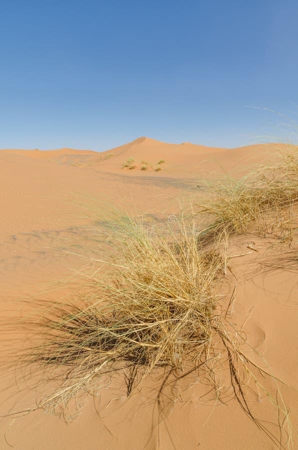 Dunas de arena famosas e inconic de Sáhara del ergio Chebbi en el desierto marroquí cerca de Merzouga, Marruecos, África del Nort imagenes de archivo