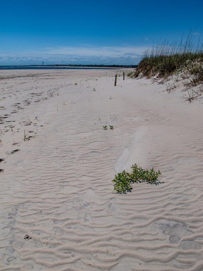 Dunas de arena a lo largo de la isla del roble fotos de archivo libres de regalías
