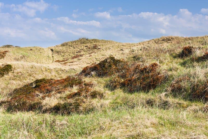 Dunas de arena overgrown en Norderney imágenes de archivo libres de regalías