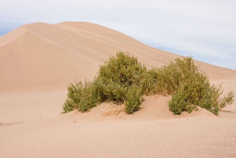 Dunas de Death Valley  fotografia de stock royalty free