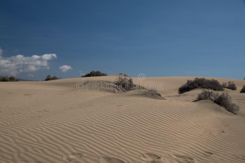 Dunas de oro, arena, foto de archivo