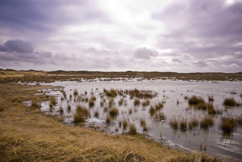 Dunas de Texel fotos de stock