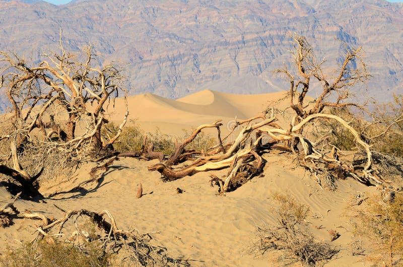 Dunas do Mesquite fotografia de stock