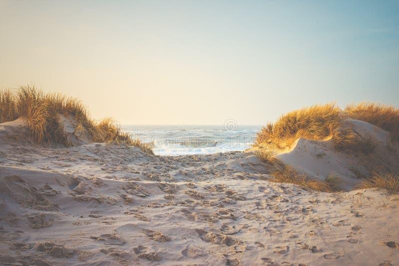 Dunas e grama na praia na costa de Dinamarca fotografia de stock royalty free