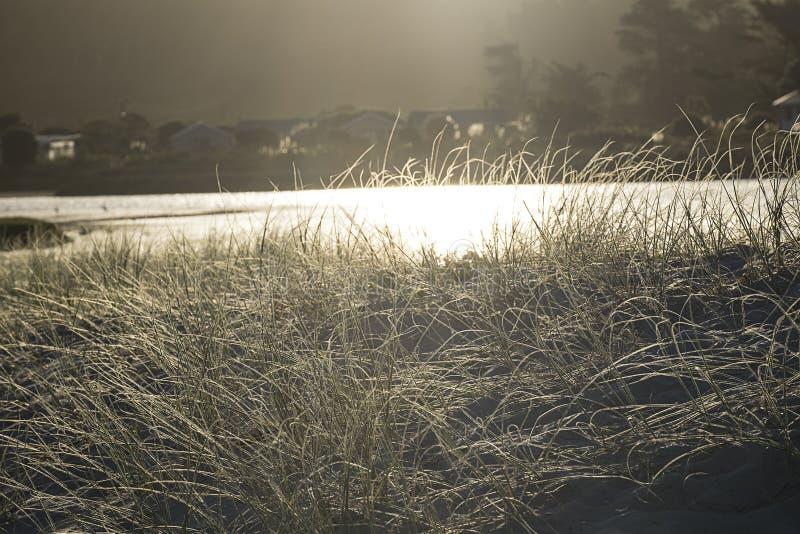 Dunas e hierbas de arena en la tierra del norte Nueva Zelanda de la playa de Pakiri fotos de archivo libres de regalías
