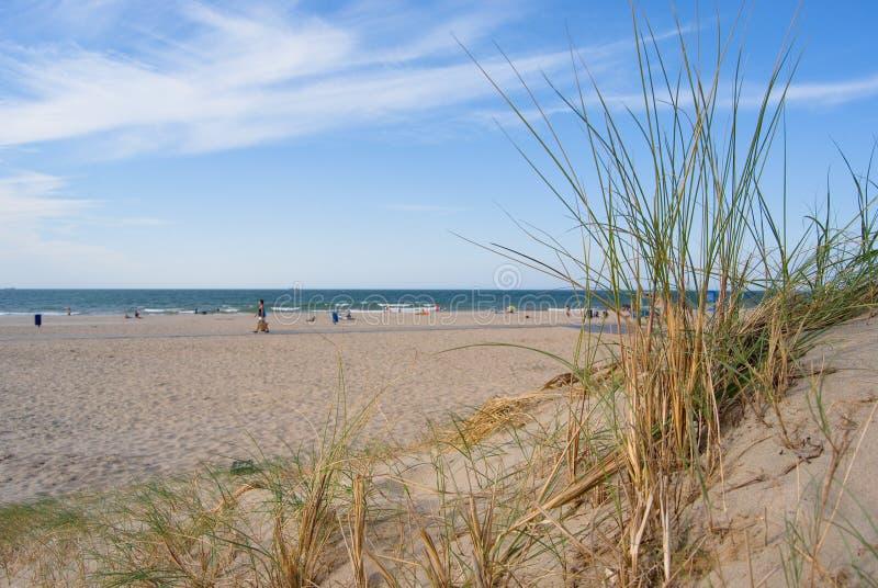 Dunas e plantas no Sandy Beach branco Hoek camionete Holanda, costa oeste sul, Países Baixos foto de stock