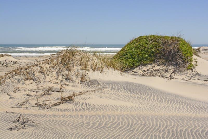 Dunas e vegetação de areia em uma costa remota do oceano fotografia de stock
